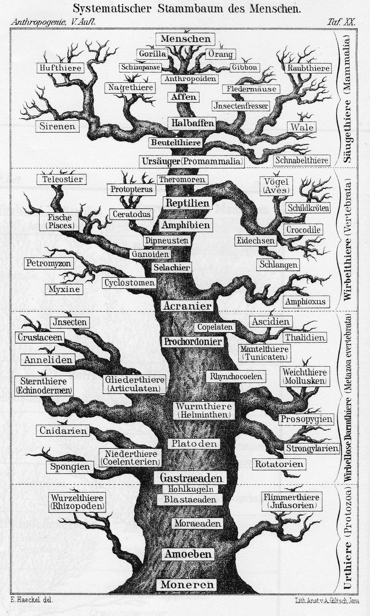 Wissens-Bäume