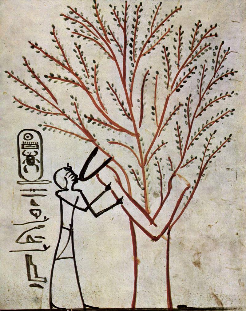 stammbäume lesen biologie verwandt