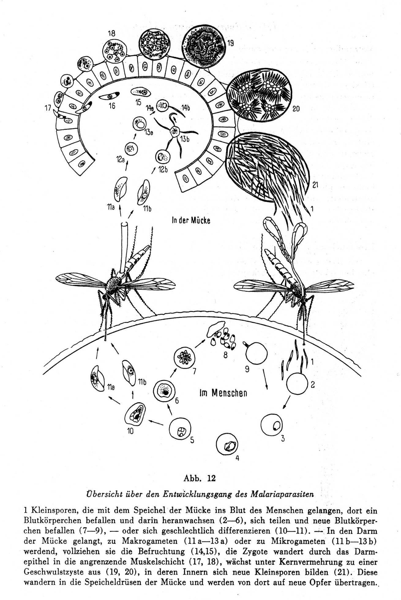 Atemberaubend Wesentliche Menschliche Anatomie Und Physiologie ...